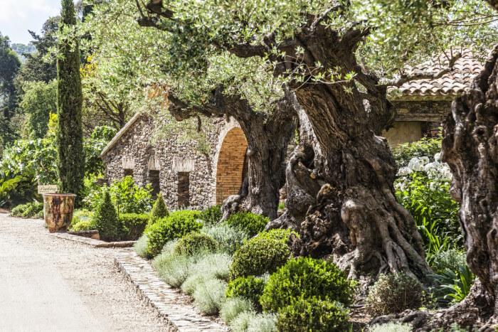 chambres d'hotes de charme en france - Domaine les Mésanges - Saint-Tropez