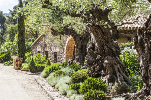 Domaine les Mésanges - b&b Provence Alpes Côte d'Azur